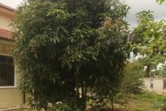 khv-1-orchard-sactuary-1