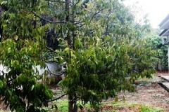 khv-1-orchard-sanctuary-resize